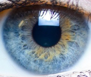 IRIs...pas clair dans FONCTIONNEMENT iris-oeil-300x255